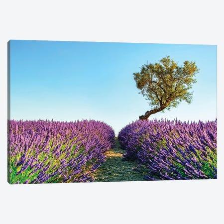Provence Canvas Print #EMN90} by Manjik Pictures Canvas Art Print