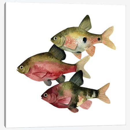 Rainbow Fish I Canvas Print #EMS128} by Emma Scarvey Canvas Print