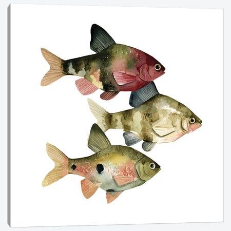 Rainbow Fish II Canvas Print #EMS129} by Emma Scarvey Art Print