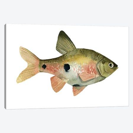 Rainbow Fish III Canvas Print #EMS130} by Emma Scarvey Canvas Art