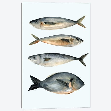 Four Fish I Canvas Print #EMS13} by Emma Scarvey Canvas Artwork