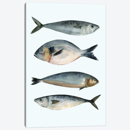 Four Fish II Canvas Print #EMS14} by Emma Scarvey Art Print