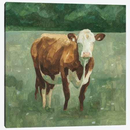 Hereford Cattle I Canvas Print #EMS152} by Emma Scarvey Canvas Artwork