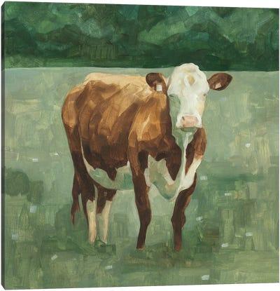 Hereford Cattle I Canvas Art Print