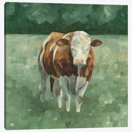 Hereford Cattle II Canvas Print #EMS153} by Emma Scarvey Canvas Art