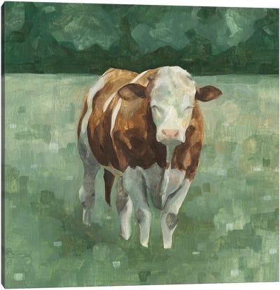 Hereford Cattle II Canvas Art Print