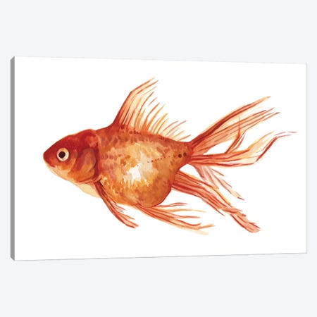 Ornamental Goldfish I Canvas Print #EMS160} by Emma Scarvey Art Print