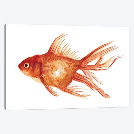 Ornamental Goldfish I Canvas Print #EMS160} by Emma Scarvey Art Print