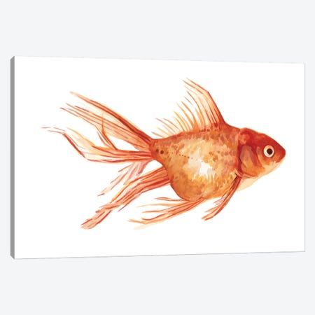 Ornamental Goldfish II Canvas Print #EMS161} by Emma Scarvey Canvas Print