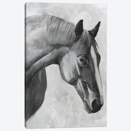 Cavallo I Canvas Print #EMS200} by Emma Scarvey Canvas Art