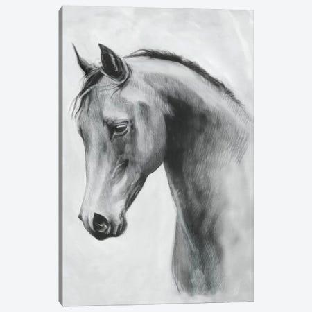 Cavallo II Canvas Print #EMS201} by Emma Scarvey Canvas Art