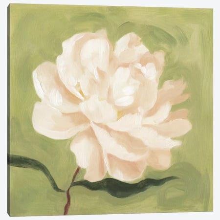 Peony On Olive I Canvas Print #EMS21} by Emma Scarvey Art Print