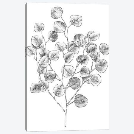 Eucalyptus Sketch I Canvas Print #EMS220} by Emma Scarvey Canvas Artwork