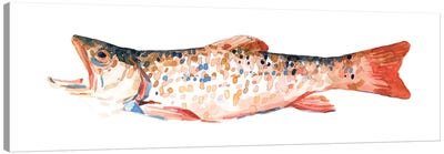 Freckled Trout I Canvas Art Print