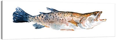 Freckled Trout II Canvas Art Print
