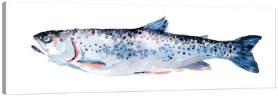 Freckled Trout III Canvas Art Print