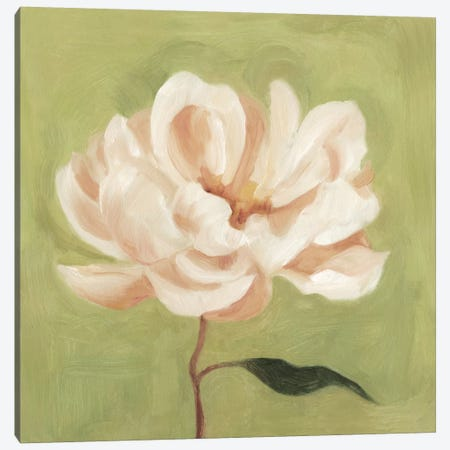 Peony On Olive II Canvas Print #EMS22} by Emma Scarvey Canvas Art Print