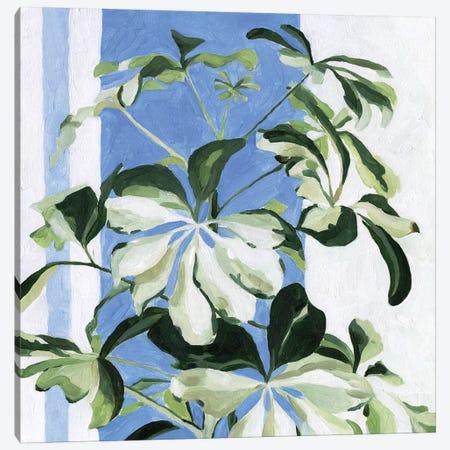 Indoor Plant II Canvas Print #EMS239} by Emma Scarvey Canvas Art Print