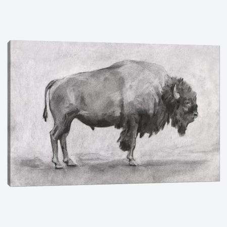 Wild Bison Study I Canvas Print #EMS323} by Emma Scarvey Canvas Art Print