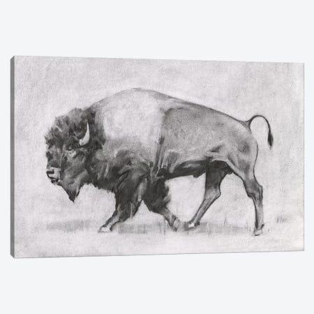 Wild Bison Study II Canvas Print #EMS324} by Emma Scarvey Canvas Artwork