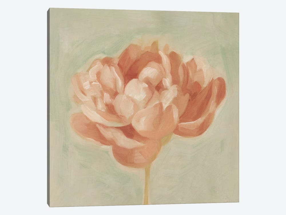 Spring Peony I by Emma Scarvey 1-piece Canvas Print