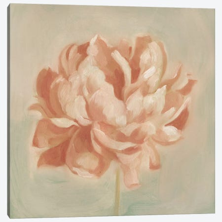 Spring Peony II Canvas Print #EMS33} by Emma Scarvey Canvas Artwork