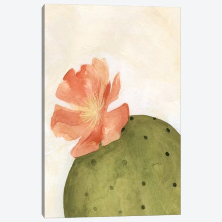 Arid Bloom I Canvas Print #EMS41} by Emma Scarvey Canvas Art Print
