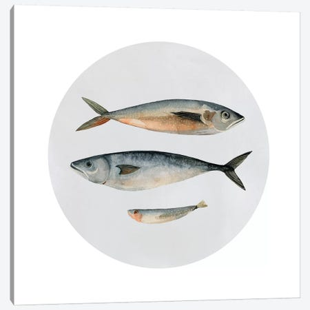 Three Fish I Canvas Print #EMS88} by Emma Scarvey Art Print