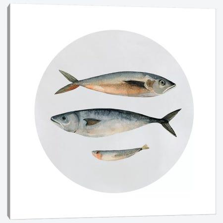Three Fish I Canvas Print #EMS88} by Emma Scarvey Art Print
