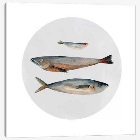 Three Fish II Canvas Print #EMS89} by Emma Scarvey Art Print