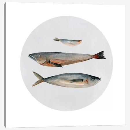 Three Fish II Canvas Print #EMS89} by Emma Scarvey Art Print