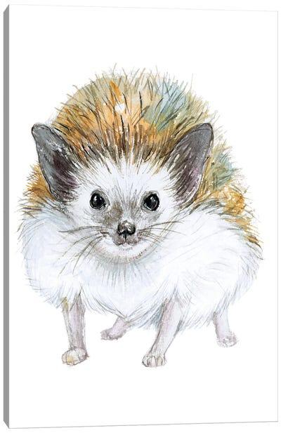 Baby Hedgehog Canvas Art Print
