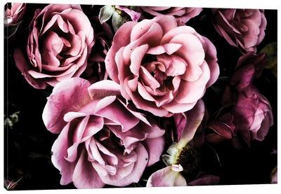 Baroque Roses Canvas Art Print