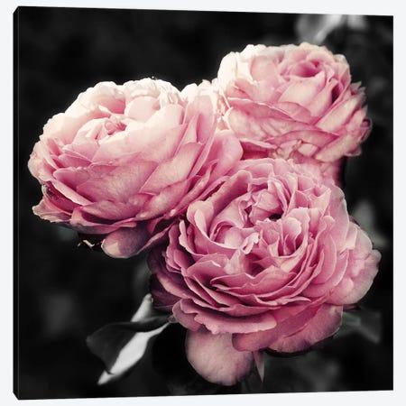 Pink Florals in Noir Canvas Print #ENA40} by Emily Navas Art Print