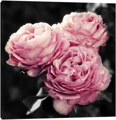 Pink Florals in Noir Canvas Art Print