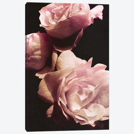 Solitary Bouquet II Canvas Print #ENA47} by Emily Navas Canvas Wall Art