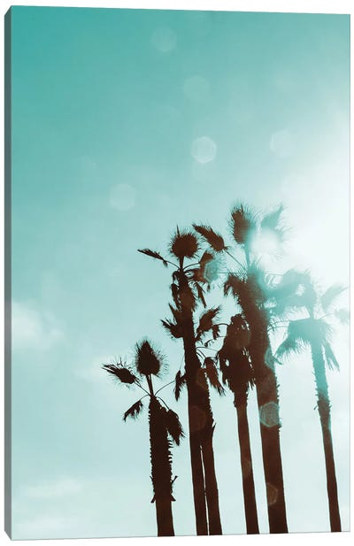 Palms In The Sun Canvas Art Print