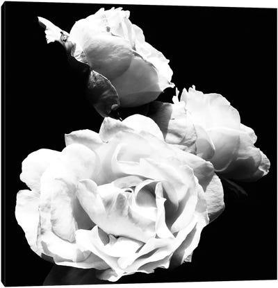 Dramatic Love Blooms  I Canvas Art Print
