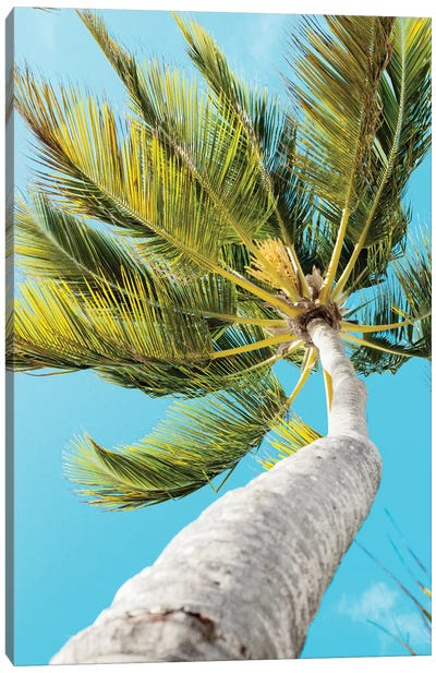 Tropical Winds Canvas Art Print