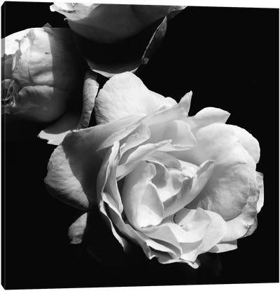 Dramatic Love Blooms II Canvas Art Print