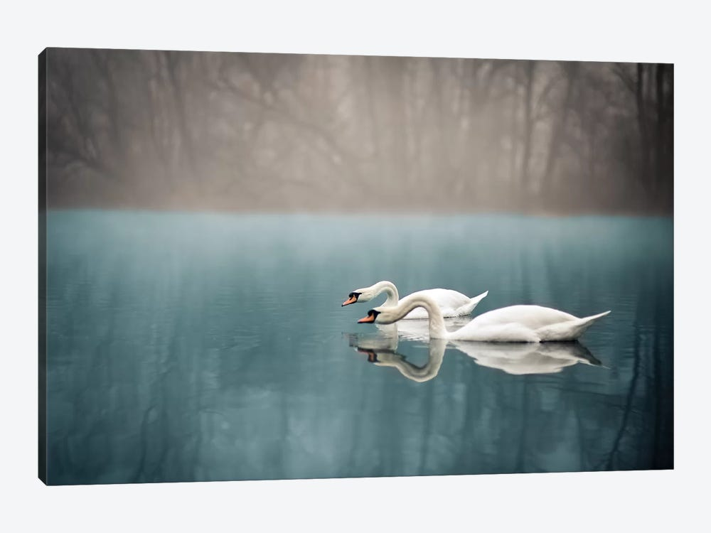 Swan's River by Enzo Romano 1-piece Canvas Print