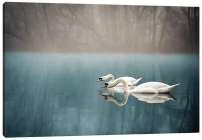 Swan's River Canvas Art Print