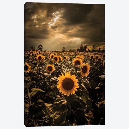 Sunflowers Canvas Print #ENZ68} by Enzo Romano Canvas Art