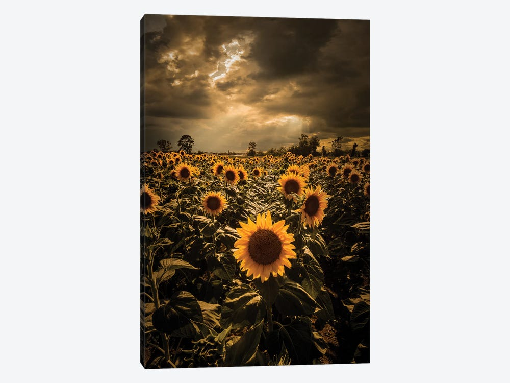 Sunflowers by Enzo Romano 1-piece Canvas Artwork