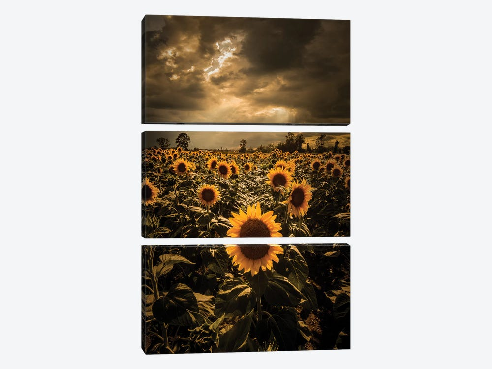 Sunflowers by Enzo Romano 3-piece Canvas Wall Art