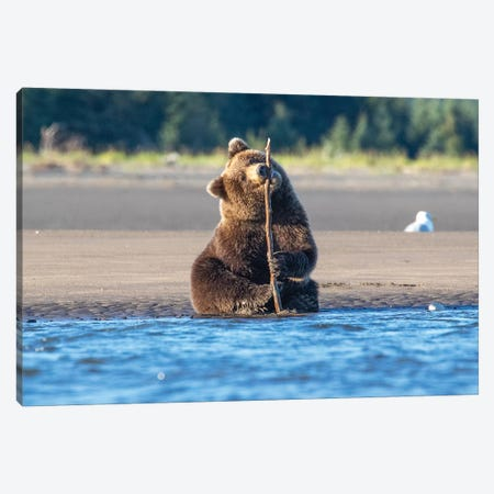 Bear Cub And Stick Canvas Print #ERF11} by Eric Fisher Canvas Artwork