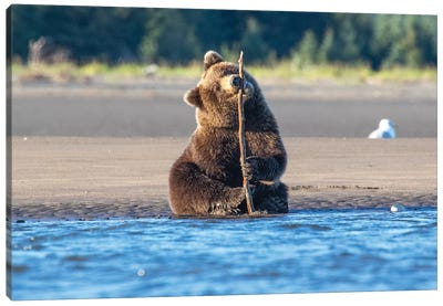 Bear Cub And Stick Canvas Art Print