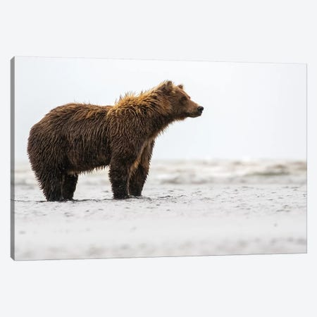 Bear In The Water Canvas Print #ERF12} by Eric Fisher Canvas Art