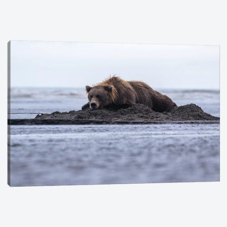 Bear Napping On Beach Canvas Print #ERF13} by Eric Fisher Canvas Wall Art