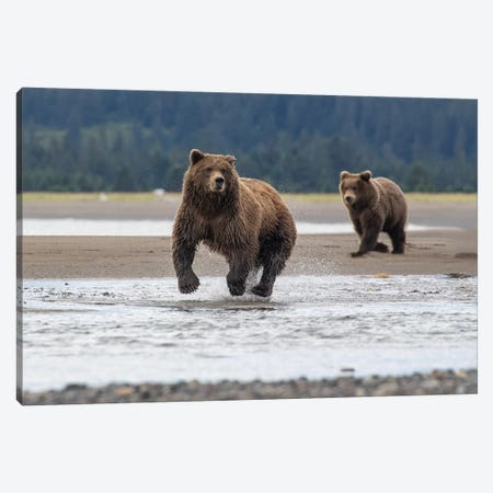 Bear On The Hunt Canvas Print #ERF14} by Eric Fisher Canvas Art Print